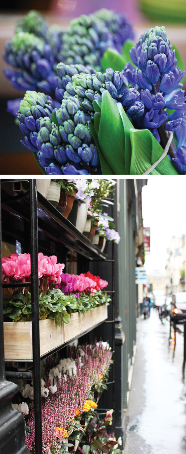 Paris-flower